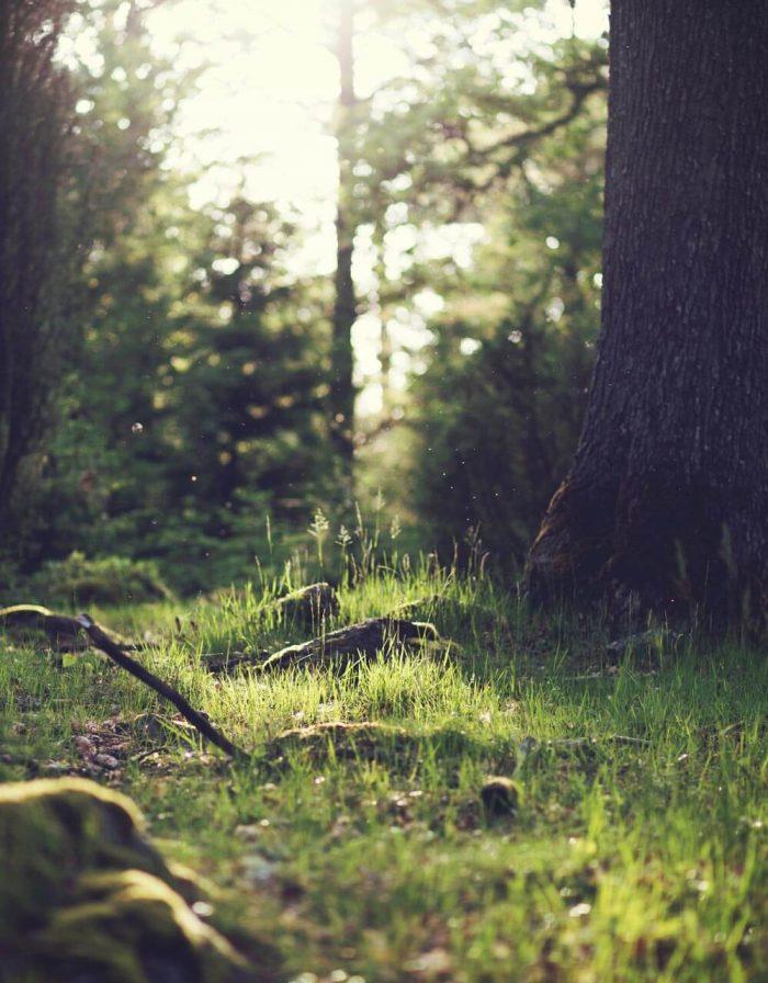 Wald mit Sonnenschein auf ein Stück Wiese neben einem Baum.